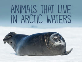 Animals That Live in Arctic Waters