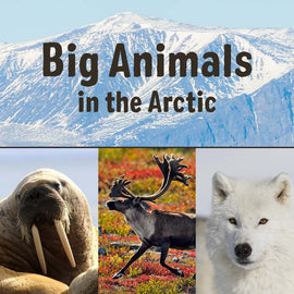 Big Animals in the Arctic