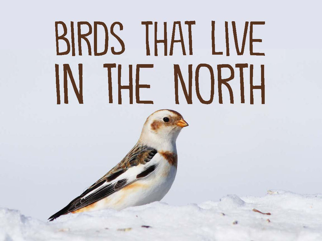 Birds That Live in the North