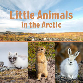 Little Animals in the Arctic