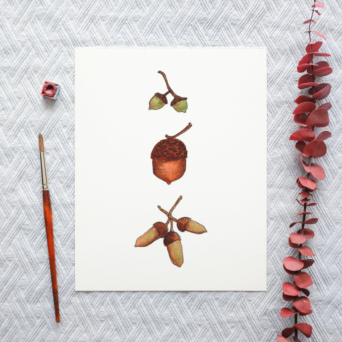 Watercolor Template - Acorns