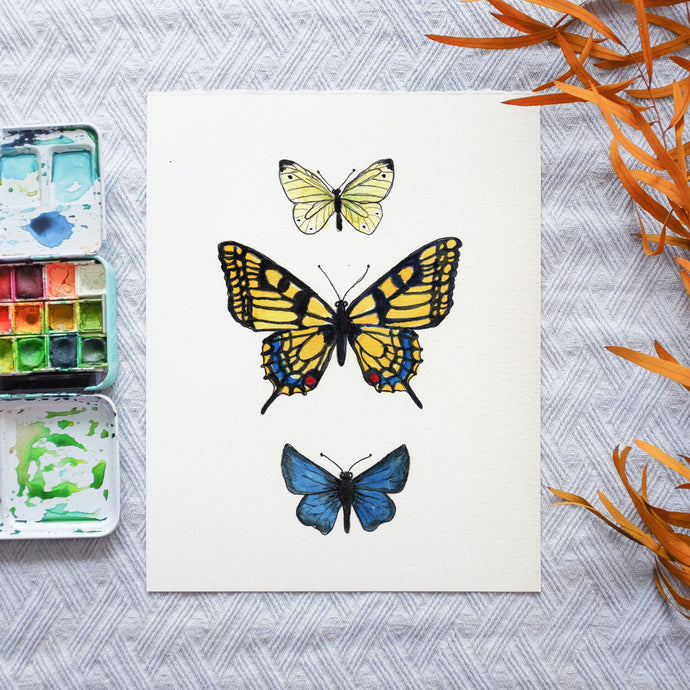 Watercolor Template - Butterflies & Moth