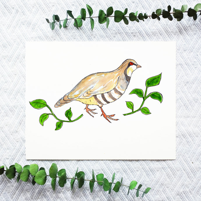 Watercolor Template - Partridge Bird
