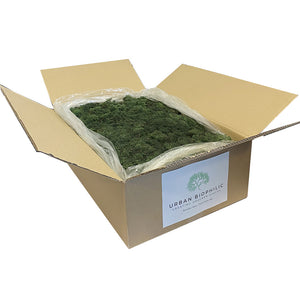 Bulk Box Preserved Reindeer Moss Dark Green