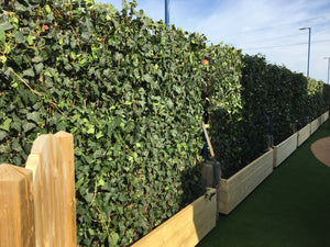 Hedera Helix Woerner Instant Ivy Hedge Screen - Various Sizes