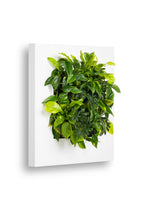 Load image into Gallery viewer, Live Picture 1 Plant Frame - 72cm x 72cm