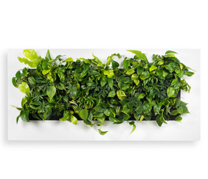 White living wall plant frame for office plants