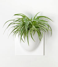 Load image into Gallery viewer, Verti Plants Bio Wall Planter - Black, White, Grey