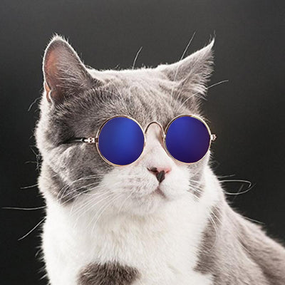 Hoomall Lovely Pet Cat Glasses Dog Glasses Pet Products For Little Dog Cat Eye-wear Dog Sunglasses Photos Pet Gadgets
