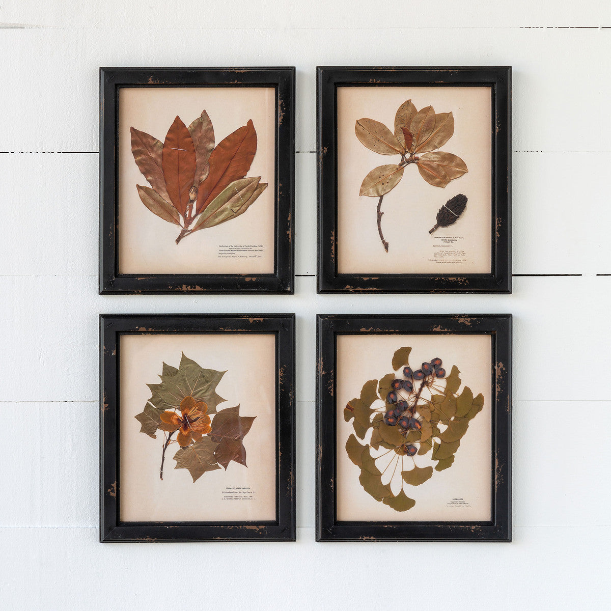 collection of 4 pressed botanical reproduction prints
