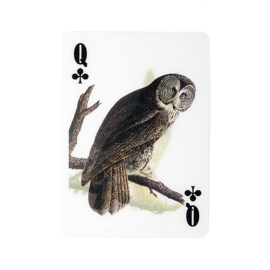 audubon bird playing cards