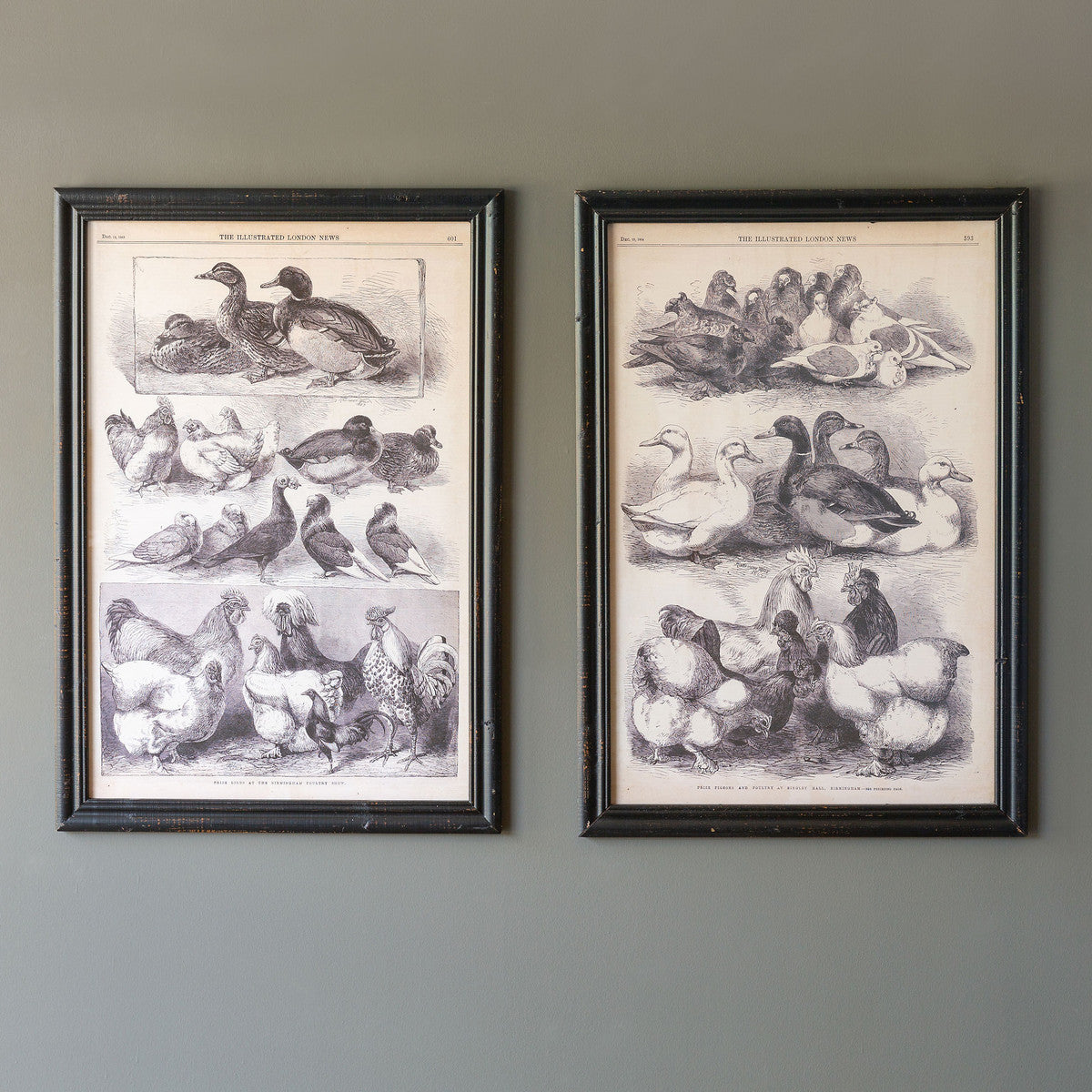 collection of two oversize fowl species reproduction prints