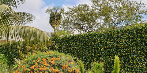 Artificial hedge photinia yellow