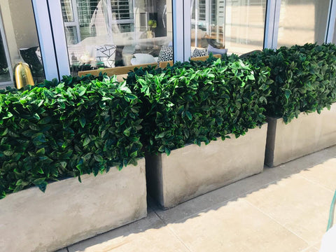 Artificial hedge photinia green