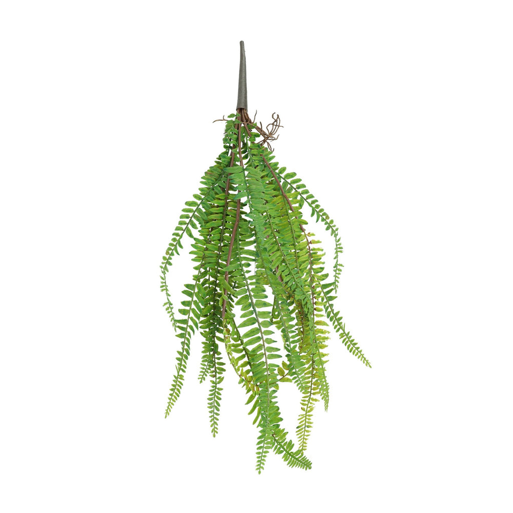 Leaf & Living Sword Fern Stem