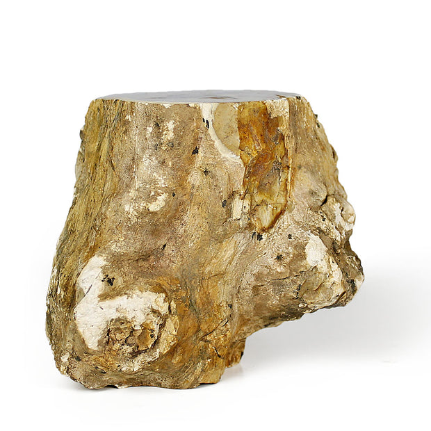 Petrified Wood Log Specimen