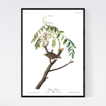 Load image into Gallery viewer, Chipping Sparrow Print by John Audubon