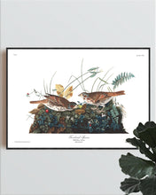 Load image into Gallery viewer, Fox-Coloured Sparrow Print by John Audubon