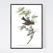 Load image into Gallery viewer, Wood Pewee Print by John Audubon