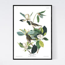 Load image into Gallery viewer, Warbling Flycatcher Print by John Audubon