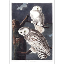 Load image into Gallery viewer, Snowy Owl Print by John Audubon