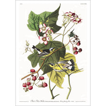 Load image into Gallery viewer, Black and Yellow Warbler Print by John Audubon