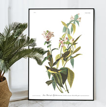 Load image into Gallery viewer, Green Black-Capt Flycatcher Print by John Audubon