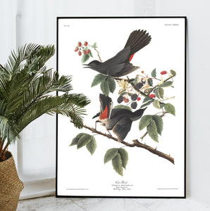 Cat Bird Print by John Audubon