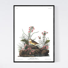Load image into Gallery viewer, Yellow-Winged Sparrow Print by John Audubon