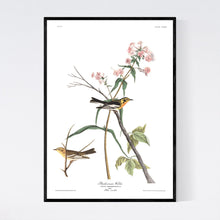 Load image into Gallery viewer, Blackburnian Warbler Print by John Audubon