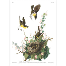Load image into Gallery viewer, Yellow-Breasted Chat Print by John Audubon