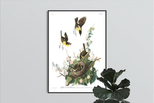 Yellow-Breasted Chat Print by John Audubon