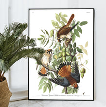 Load image into Gallery viewer, American Sparrow Hawk Print by John Audubon