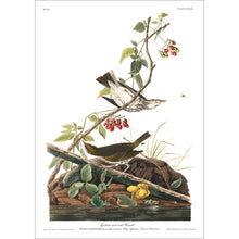 Load image into Gallery viewer, Golden-Crowned Thrush Print by John Audubon