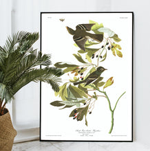 Load image into Gallery viewer, Small Green Crested Flycatcher Print by John Audubon