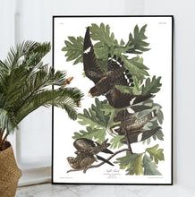 Load image into Gallery viewer, Night Hawk Print by John Audubon