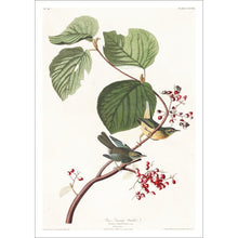 Load image into Gallery viewer, Pine Swamp Warbler Print by John Audubon