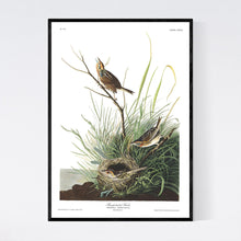 Load image into Gallery viewer, Sharp-Tailed Finch Print by John Audubon