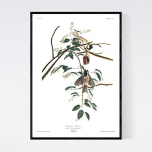 Load image into Gallery viewer, Carolina Titmouse Print by John Audubon