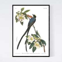 Load image into Gallery viewer, Forked-Tailed Flycatcher Print by John Audubon