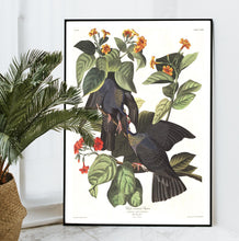 Load image into Gallery viewer, White-Crowned Pigeon Print by John Audubon