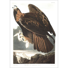 Load image into Gallery viewer, Golden Eagle Print by John Audubon