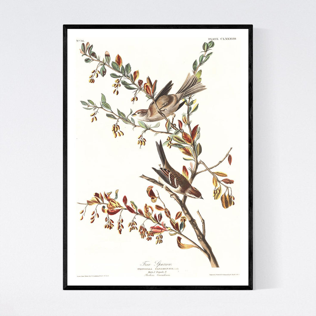 Tree Sparrow Print by John Audubon