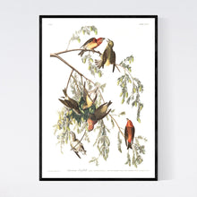 Load image into Gallery viewer, American Crossbill Print by John Audubon