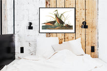 Load image into Gallery viewer, Virginian Rail Print by John Audubon