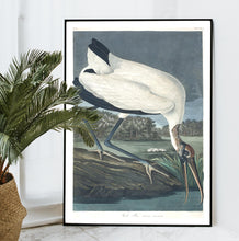 Load image into Gallery viewer, Wood Ibis Print by John Audubon