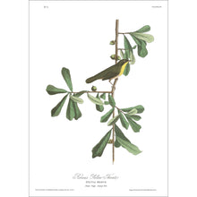 Load image into Gallery viewer, Roscoe's Yellow Throat Print by John Audubon