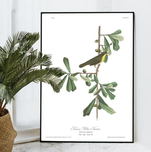 Roscoe's Yellow Throat Print by John Audubon