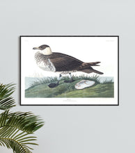 Load image into Gallery viewer, Jager Print by John Audubon