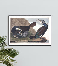 Load image into Gallery viewer, Common Cormorant Print by John Audubon
